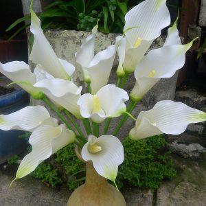 Hoa Đất Sét (Clay Flowers)